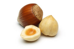 Hazelnut Group Stock Photography