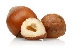 Hazelnut Stock Photography