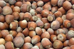 Hazelnut heap. A pile of hazelnuts from southern Turkey Stock Photography