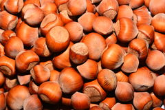 Hazelnut. The image on the whole picture of hazelnuts Royalty Free Stock Photography