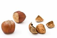 Hazelnut isolated. Three Hazelnuts isolated on white Royalty Free Stock Photos
