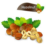 Hazelnut kernel with green leaves set. Hazelnut kernel with green leaves isolated on white background vector illustration. Organic food ingredient, traditional Royalty Free Stock Images
