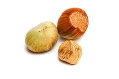 Hazelnut kernel isolated Stock Images
