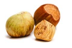 Hazelnut kernel isolated Royalty Free Stock Photography