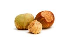 Hazelnut kernel isolated Stock Image