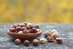 Hazelnut kernels and whole hazelnuts Stock Images