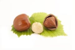 Hazelnut on leafs Stock Photos
