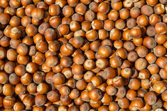 Hazelnut. It is a lot of hazelnut, a background Royalty Free Stock Images