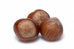 Hazelnut, macro Stock Image