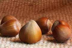 Hazelnut in macro shot Royalty Free Stock Photography