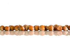 Hazelnut not peeled. Hazelnuts lined in a row with reflection on а white isolated background Royalty Free Stock Photo
