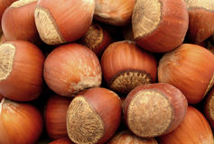 Hazelnut nut nuts food Stock Images
