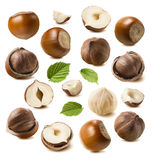 Hazelnut nut set isolated on white background Stock Photos