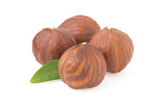 Hazelnut nut on white Royalty Free Stock Photography