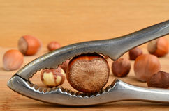 Hazelnut in nutcracker Royalty Free Stock Image