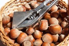 Hazelnut Stock Image