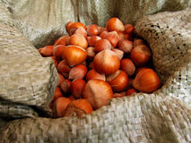 Hazelnut. Nuts hazelnut collected in autumn Stock Photos