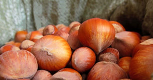 Hazelnut. Nuts hazelnut collected in autumn Royalty Free Stock Photography