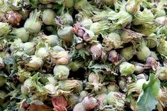 Hazelnut nuts stock image