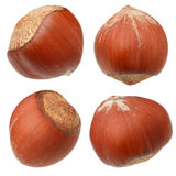Hazelnut nuts isolated royalty free stock photo