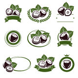 Hazelnut nuts labels and elements set. Vector Stock Photo