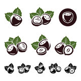 Hazelnut nuts set. Vector Stock Photos