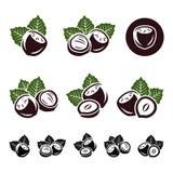 Hazelnut nuts set. Vector. Illustration Stock Photos