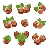 Hazelnut nuts set. Vector. Illustration royalty free illustration