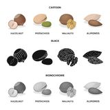 Hazelnut, pistachios, walnut, almonds.Different kinds of nuts set collection icons in cartoon,black,monochrome style. Vector symbol stock illustration stock illustration