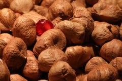 Hazelnut and pomegrante seeds. Hazelnut seeds with one pomegrante seed Stock Images