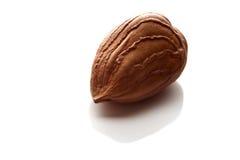 Hazelnut without shell Stock Image