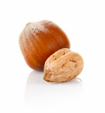 Hazelnut in shell and without Stock Photography