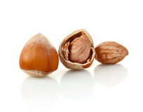 Hazelnut in shell and without Royalty Free Stock Image