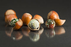 Hazelnut shell with brown - green faceted agate Stock Images