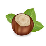 Hazelnut in shell with leaf arrangement isolated on white Stock Photography