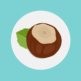 Hazelnut in shell with leaf Stock Photos