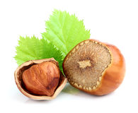 Hazelnut in shell with leaves. Stock Image