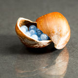 Hazelnut shell with small blue and transparent gemstones Stock Image