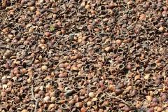 Hazelnut shells mulching background Stock Photo