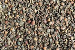Hazelnut shells mulching background Royalty Free Stock Images