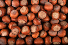 Hazelnut texture Royalty Free Stock Images