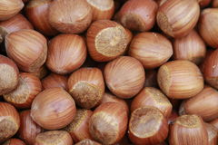 Hazelnut texture Stock Photography