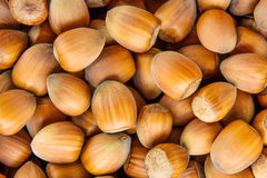 Hazelnut texture Royalty Free Stock Photography