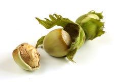 From hazelnut tree. Fresh hazelnut just from tree Royalty Free Stock Photo