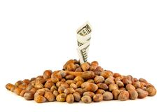 Hazelnut Turkish hazel to a wooden bowl. The concept of the grow. Th of the transformation of hazelnut nuts into money dollars. Isolate on white background royalty free stock image