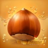 Hazelnut, vector background Stock Photography
