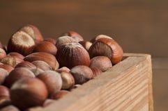 Hazelnut w drewnianym pudełku Obraz Stock
