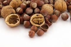 Hazelnut and walnut group Royalty Free Stock Images