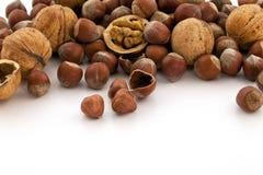 Hazelnut and walnut group Royalty Free Stock Image