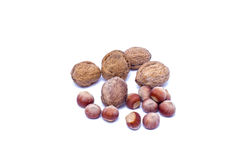 Hazelnut Walnut Stock Photos